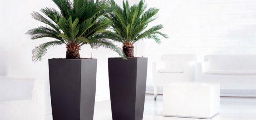 kunst palmbomen