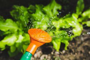 Waarom kiezen voor een groene tuin