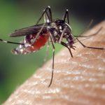 Last van insecten in huis? Dit doe je ertegen!