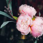 Hoe houdt u uw binnenplanten mooi bloeiend?