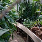Dit zijn de musthaves voor je tuin